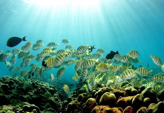 Xxx 51997523dm002 Coral Reefs A Env Usa Hi