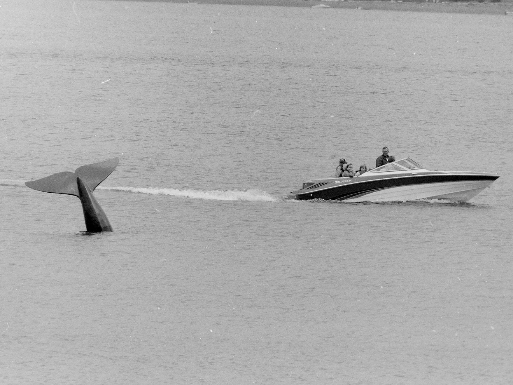07/09/91Whale Tail