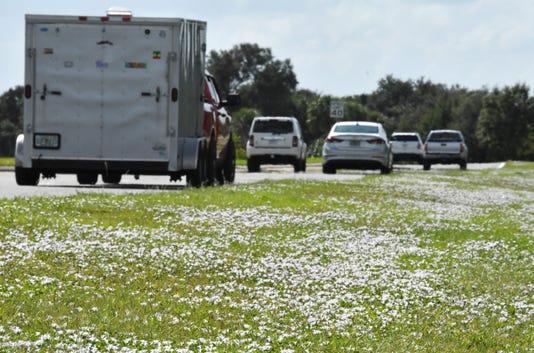 Florida Snow Flowers