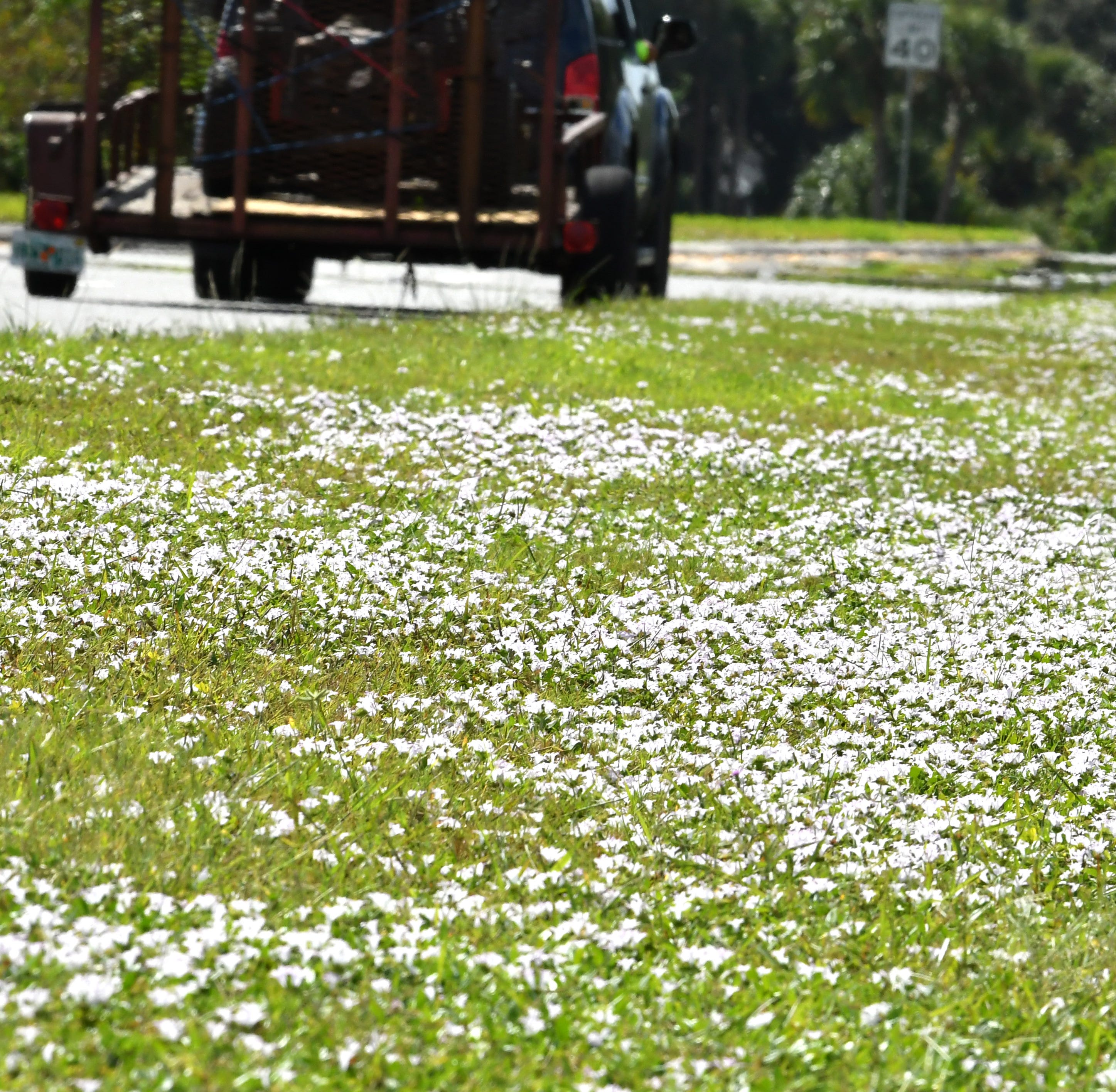 Gardening: snow for the north; Florida snow for us