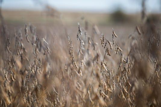 1024 Harvest 03 Jpg