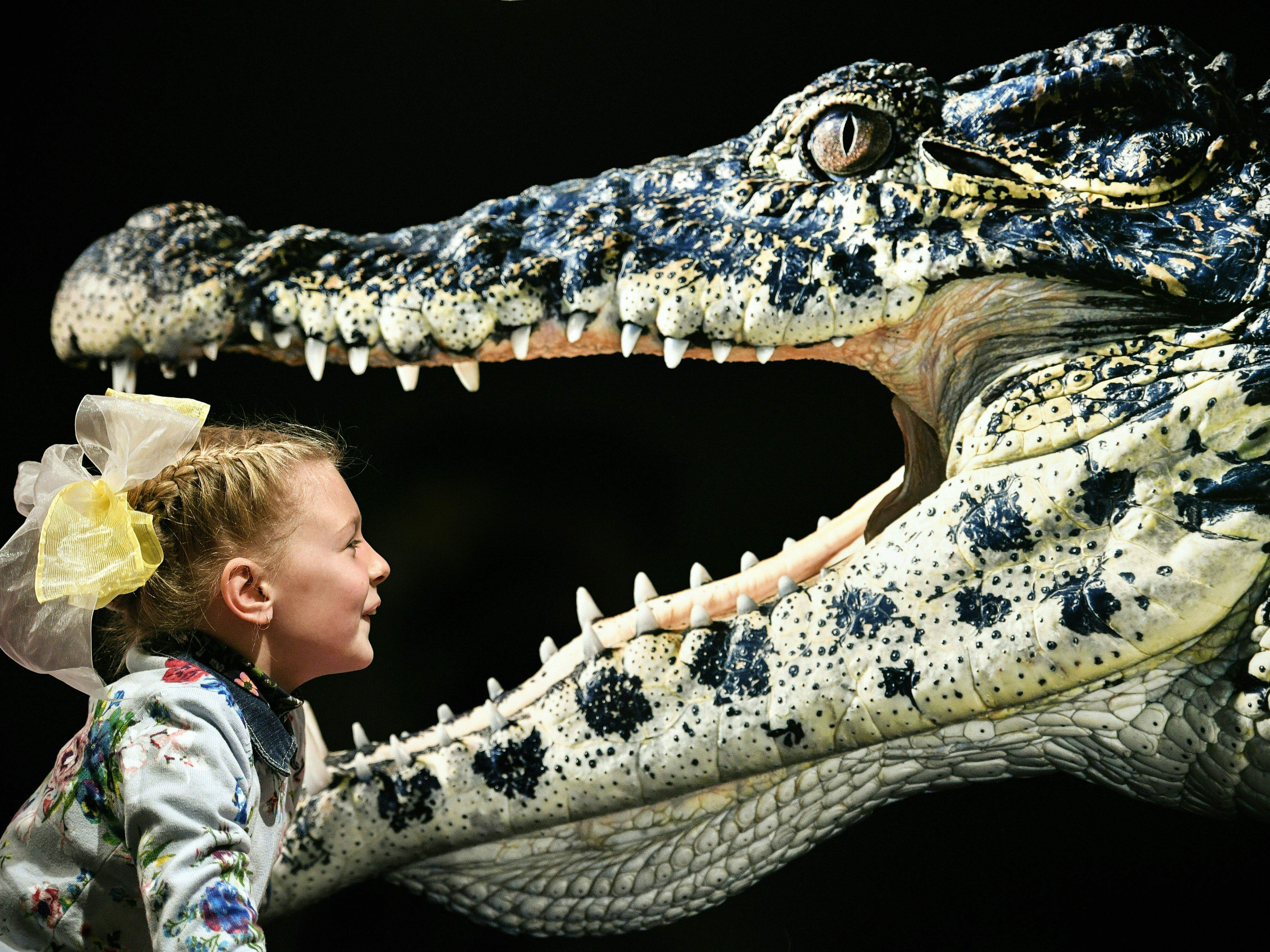 "A young visitor looks at the photograph ""Cuban Crocodile"" by Tim Flach, a British photographer who specializes in studio photography of animals, during his exhibition in Moscow on Oct. 20, 2018."