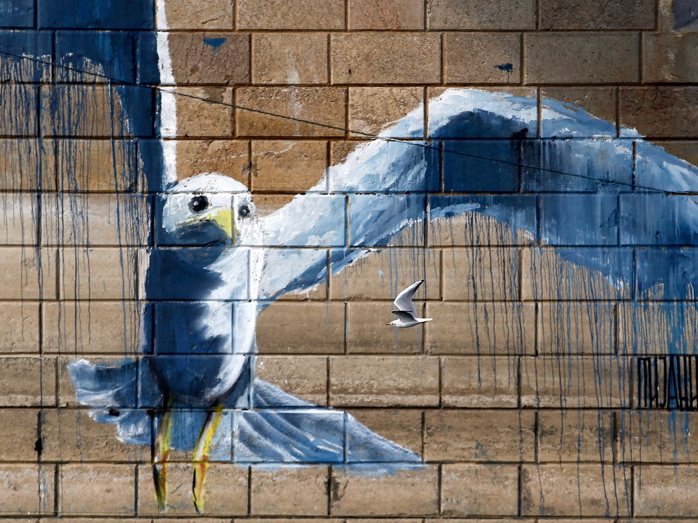 A river gull flies under the bridge by graffiti on the Sava river in Belgrade, Serbia, Tuesday, Oct. 23, 2018.