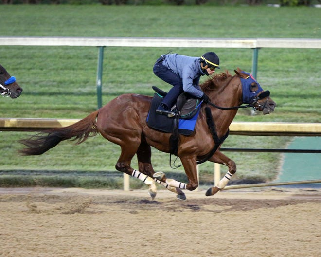 Mind Your Biscuits works out at Churchill Downs in advance of the 2018 Breeders' Cup.