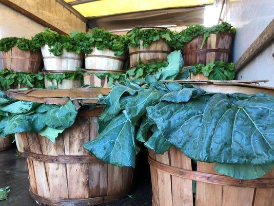 Turnip Greens 01