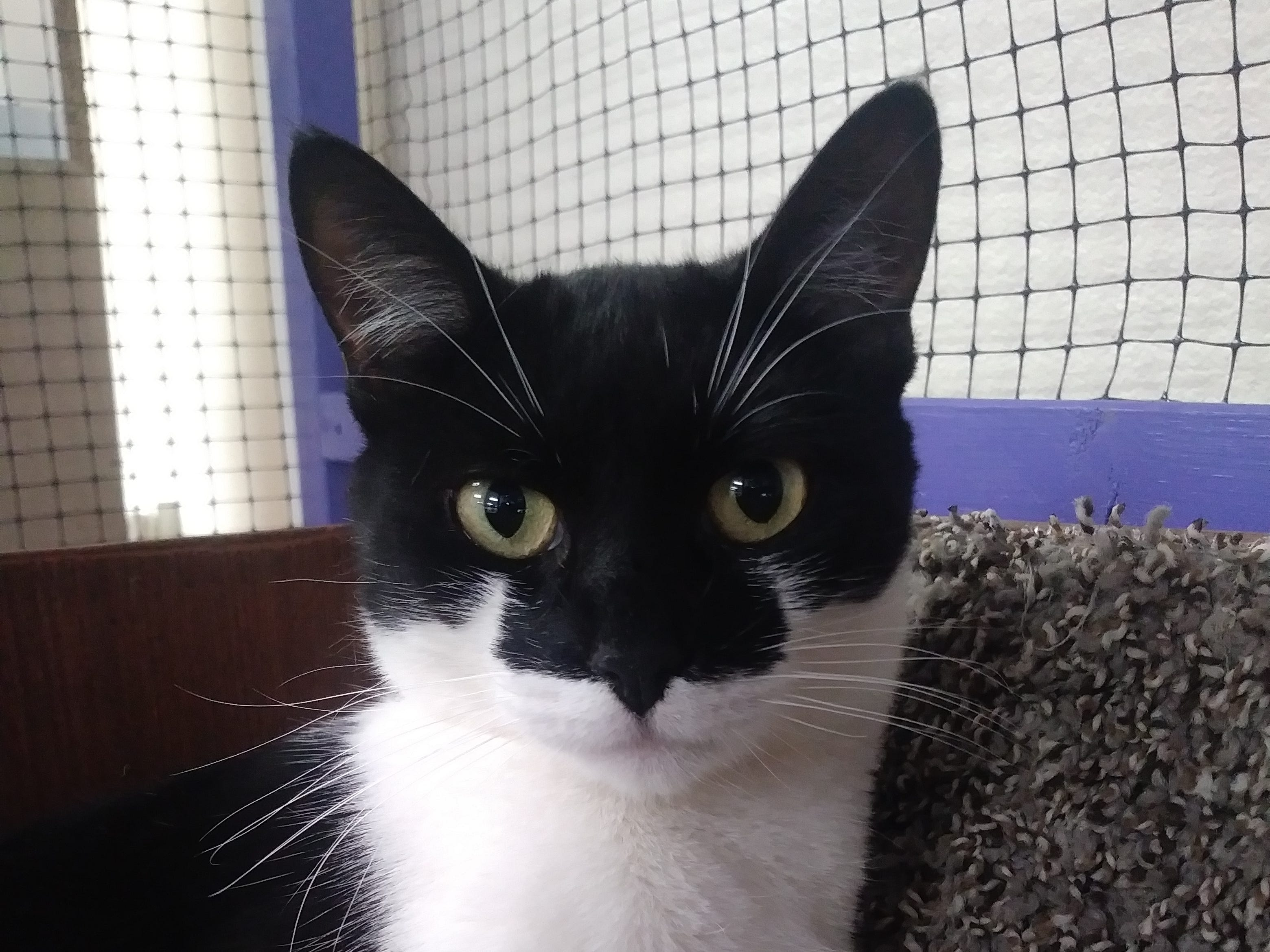 Missy is a beautiful young mother of four kittens. She enjoys going for rides in her stroller. She and her daughter Domino are available for adoption. Email Spay Neuter and Protect at Snap.spayneuterandprotect@gmail.com. Call 209-6966.