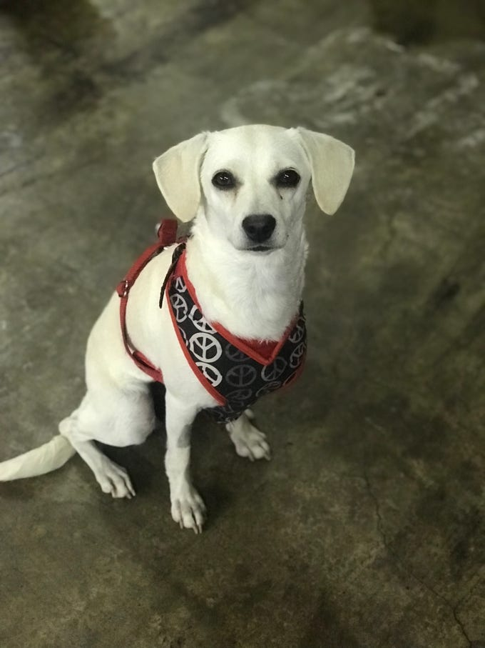 Bubbles is a sweet and loyal, 15-pound female mutt. She's 2 years old and does well with other dogs and cats. She walks well on a harness and loves to snuggle. Visit Tails of Rescue Adoption Center, 981 Lake Blvd., Redding. Call 448-7444. Go to http://tailsofrescue.org.