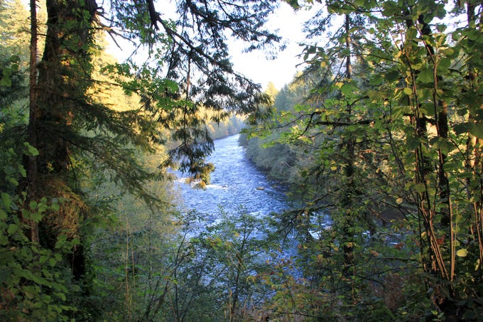 Several views of the North Santiam River can be had from trails in Minto County Park.