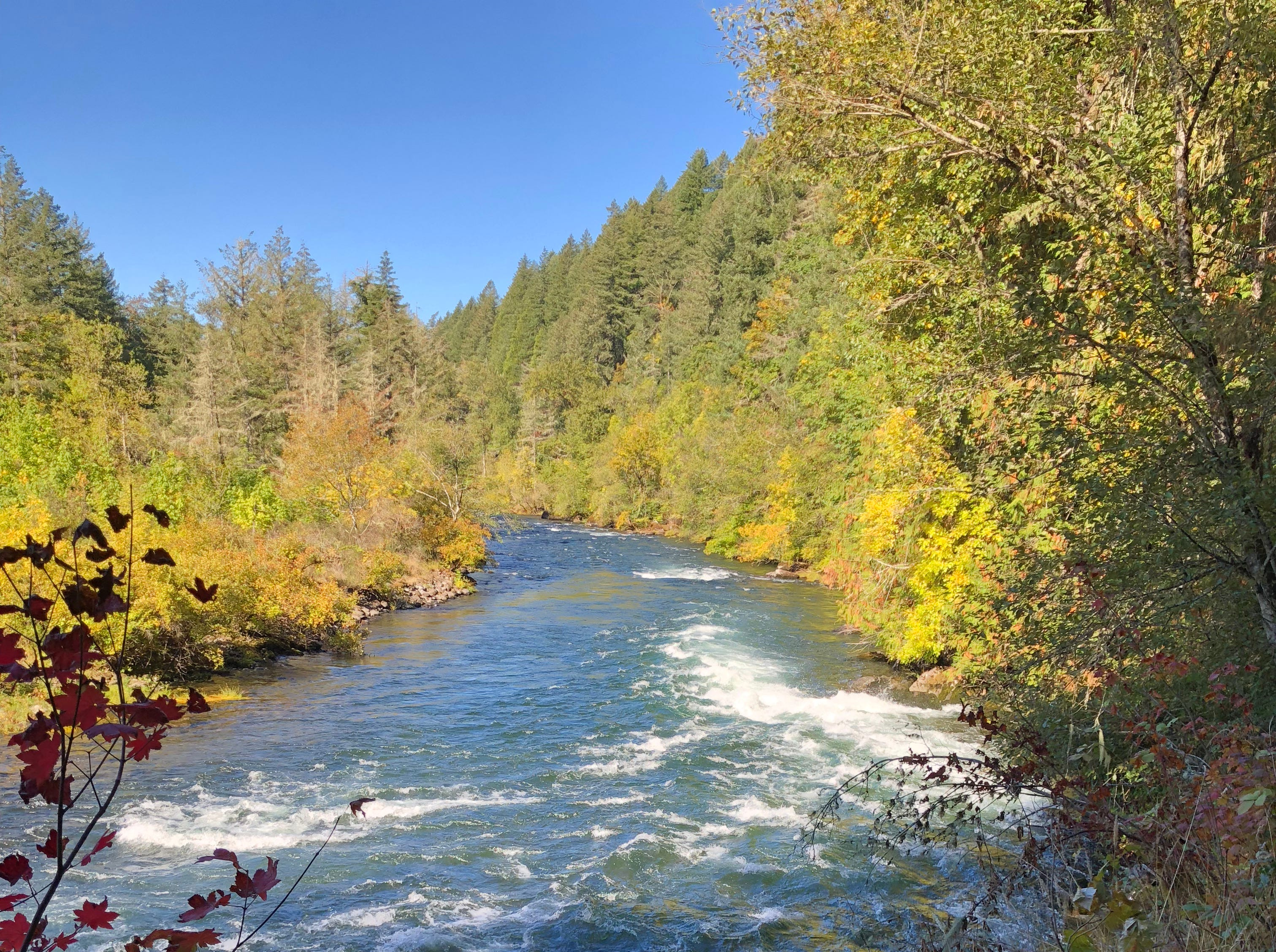 Work by crews this summer opened up a new trail and view point in Minto Park on the North Santiam River.