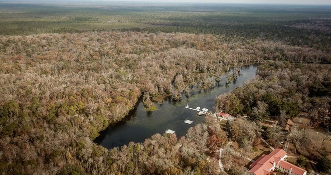 """The """"browning:"""" of once clear Wakulla Springs is subject of Florida State University study."""