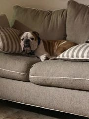 Tank finds a spot on the couch