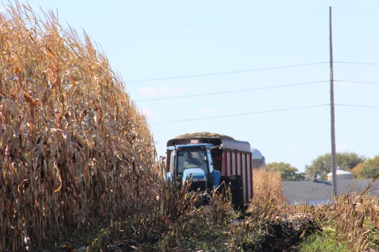 Farmers in counties with tar spot are advised to harvest corn as soon as possible.