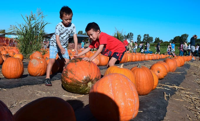 Children push a large pumpkin on a visit to a pumpkin patch in Irvine, California on October 20, 2018 on the second-to-last weekend before Halloween. - Spending in the US this year is expected to reach $9 billion as more than 175 million Americans are expected to partake in Halloween festivities. (Photo by Frederic J. BROWN / AFP)FREDERIC J. BROWN/AFP/Getty Images ORG XMIT: Pumpkin p ORIG FILE ID: AFP_1A66KC