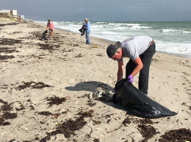 Red tide kills more species of fish