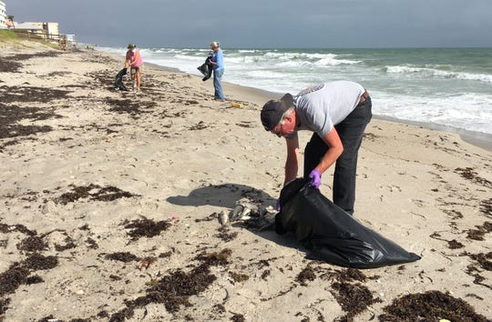 Volunteers picked up dead fish Thursday in Satellite Beach.
