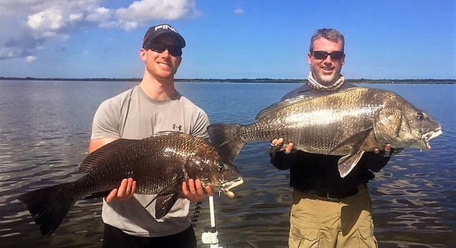 Black drum schools are working the Mosquito Lagoon, said Capt. Jon Lulay of Mosquito Lagoon Redfish Charters in Titusville.
