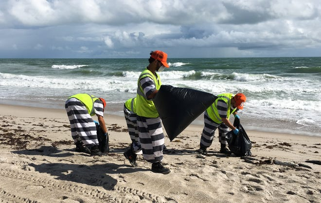 Inmates pick up dead mullet and other fish Thursday in Satellite Beach.