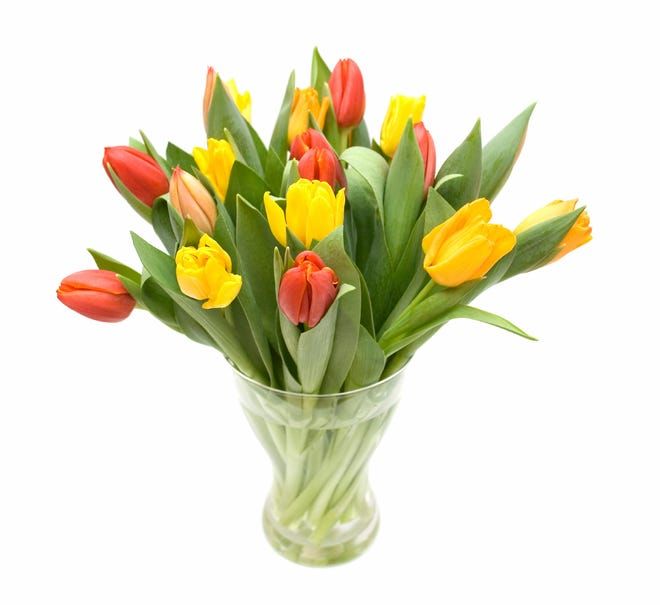 Red, orange and yellow tulips in vase