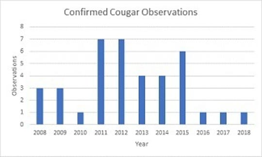 State officials have confirmed 38 cougar reports since 2008.