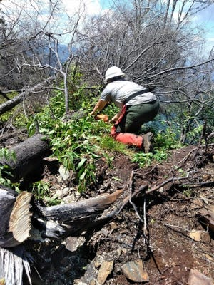 A crew worker handles a fallen tree on the Sugarland Mountain trail during a rehabilitation project following the 2016 wildfire in the Great Smoky Mountains National Park.