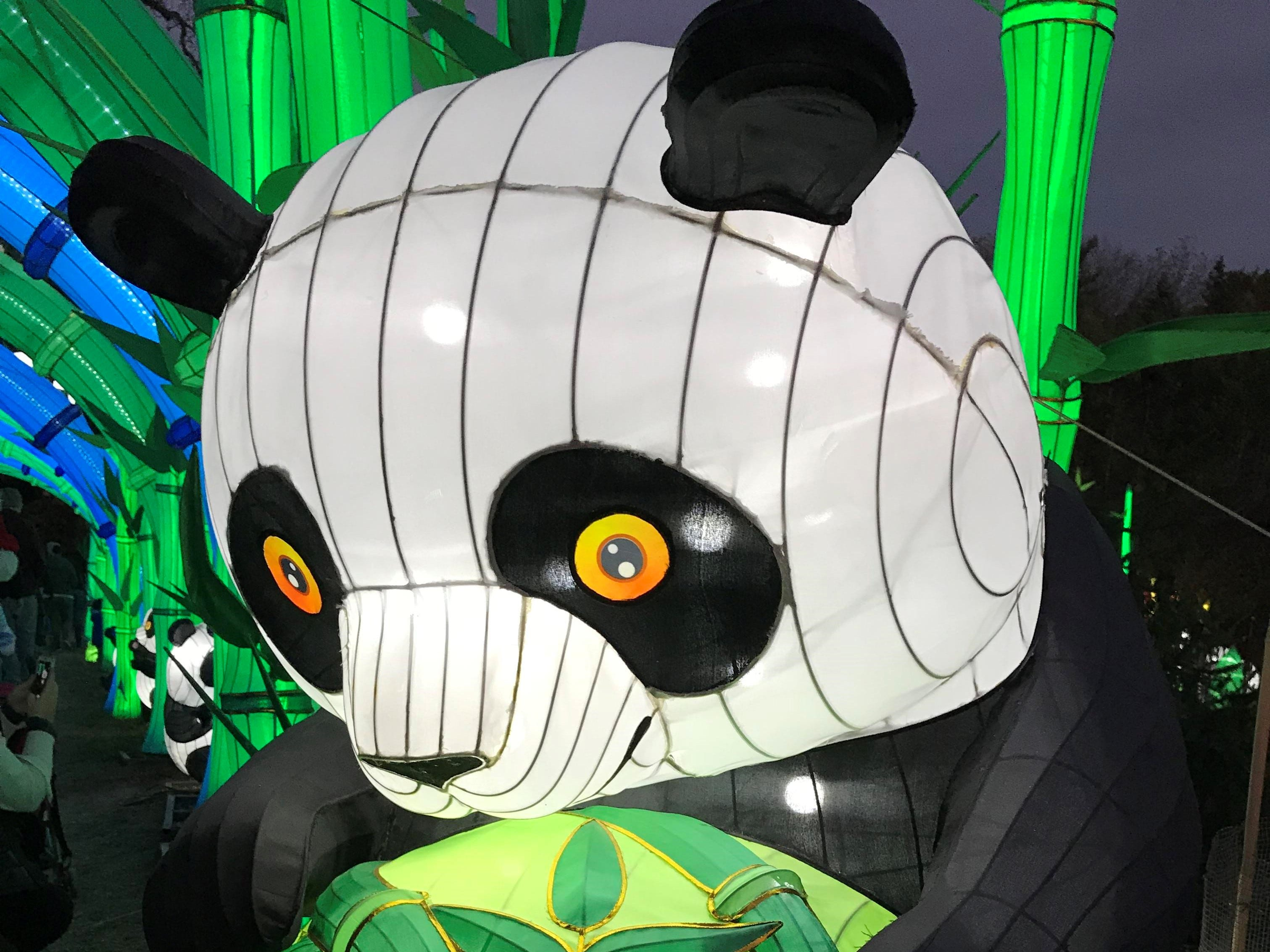 The China Lights lantern festival in 2018 is all about the pandas. The theme for this year's popular event is Panda-Mania.