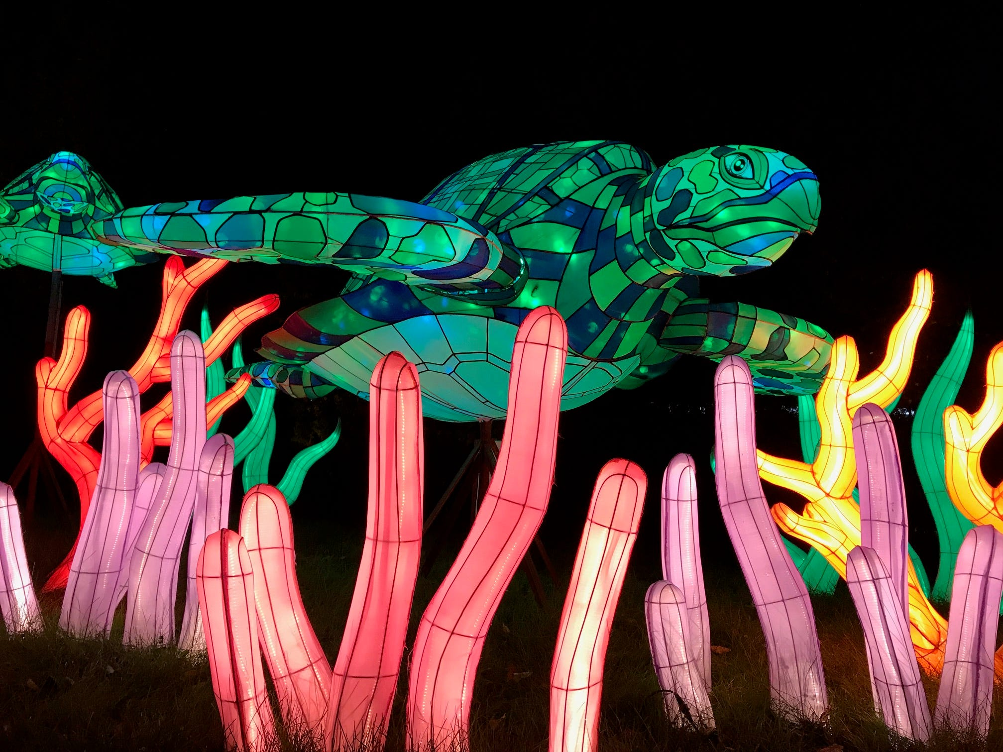 A giant turtle swims through colorful algae at the 2018 China Lights lantern festival. The turtle is one of many new displays at this year's event.
