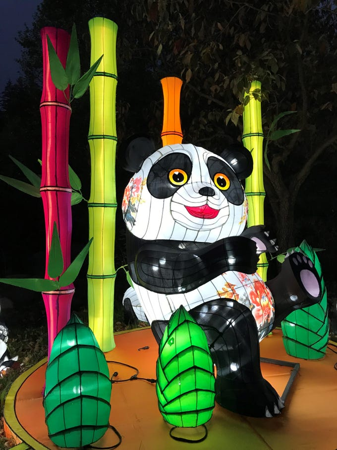 This panda at the China Lights lantern festival at the Boerner Botanical Gardens is surrounded by bamboo and leaves, their primary diet. With the theme, Panda-Mania, panda displays are front and center at this year's event.