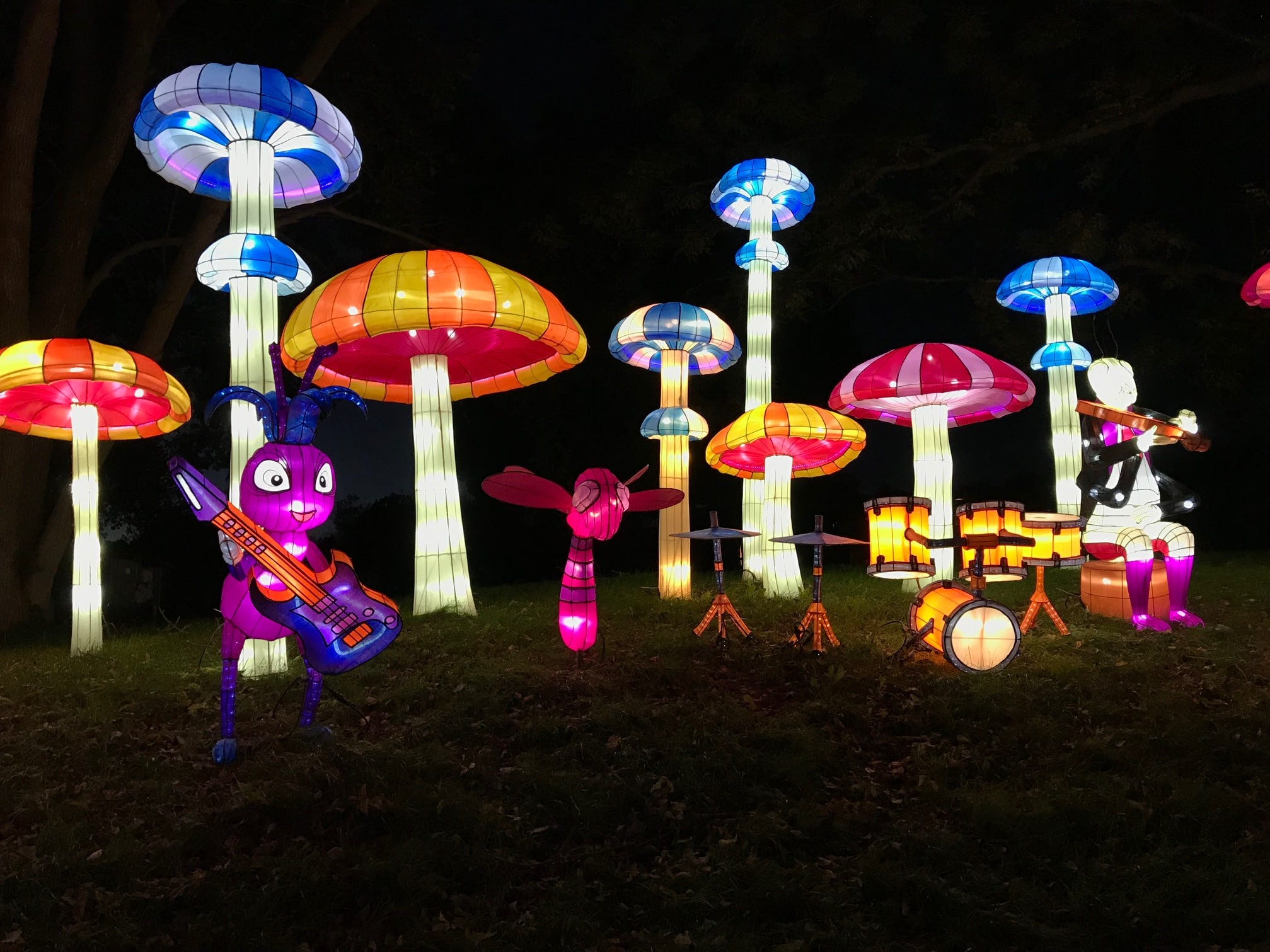 Insect Land is a fun display at the China Lights lantern festival in 2018. There are 45 displays for guests to enjoy.