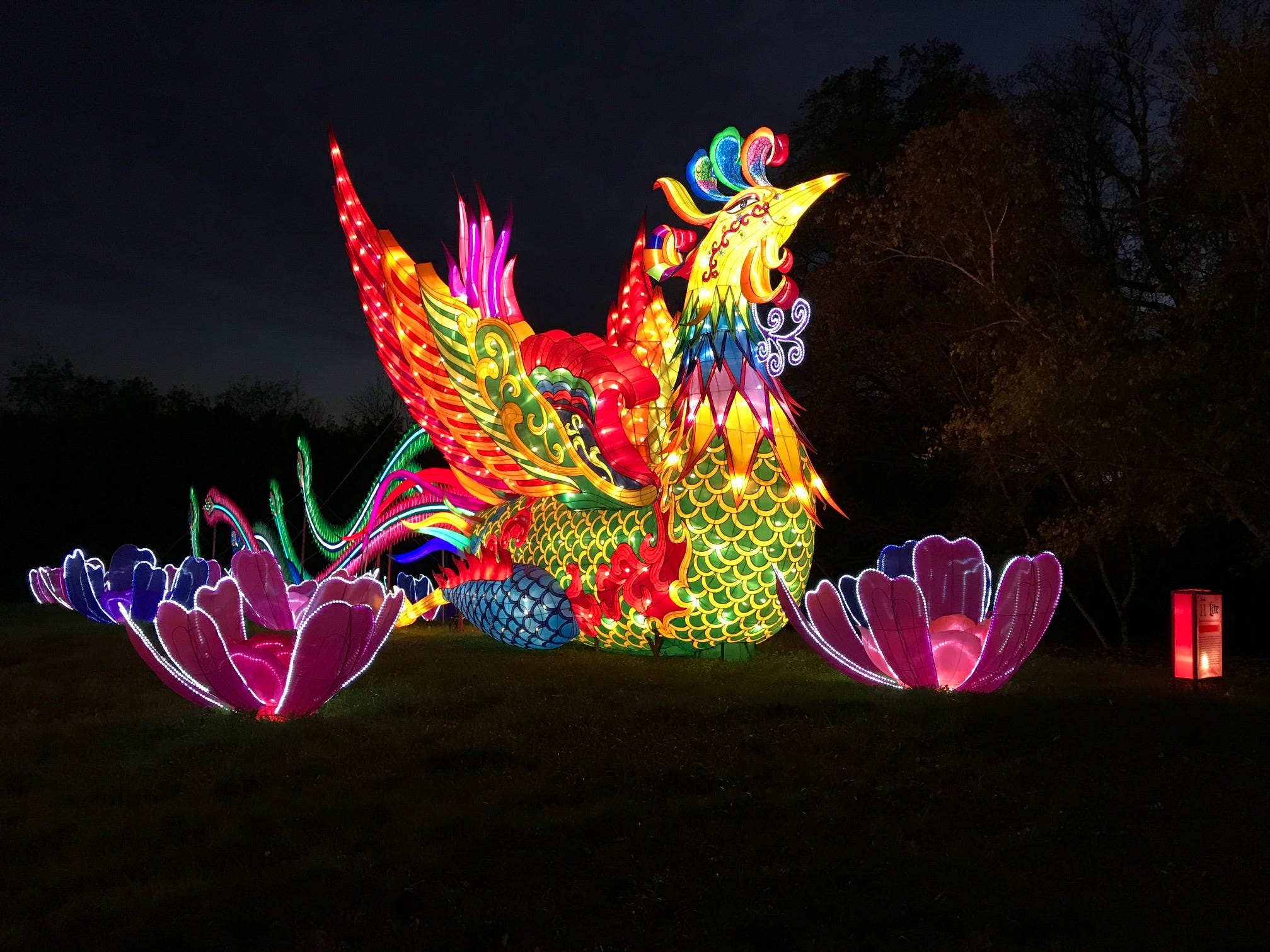 The phoenix stands tall at the 2018 China Lights lantern festival on the grounds of the Boerner Botanical Gardens. The phoenix, back from 2017, sits next to the dragon on the festival's three-fourths-mile path.