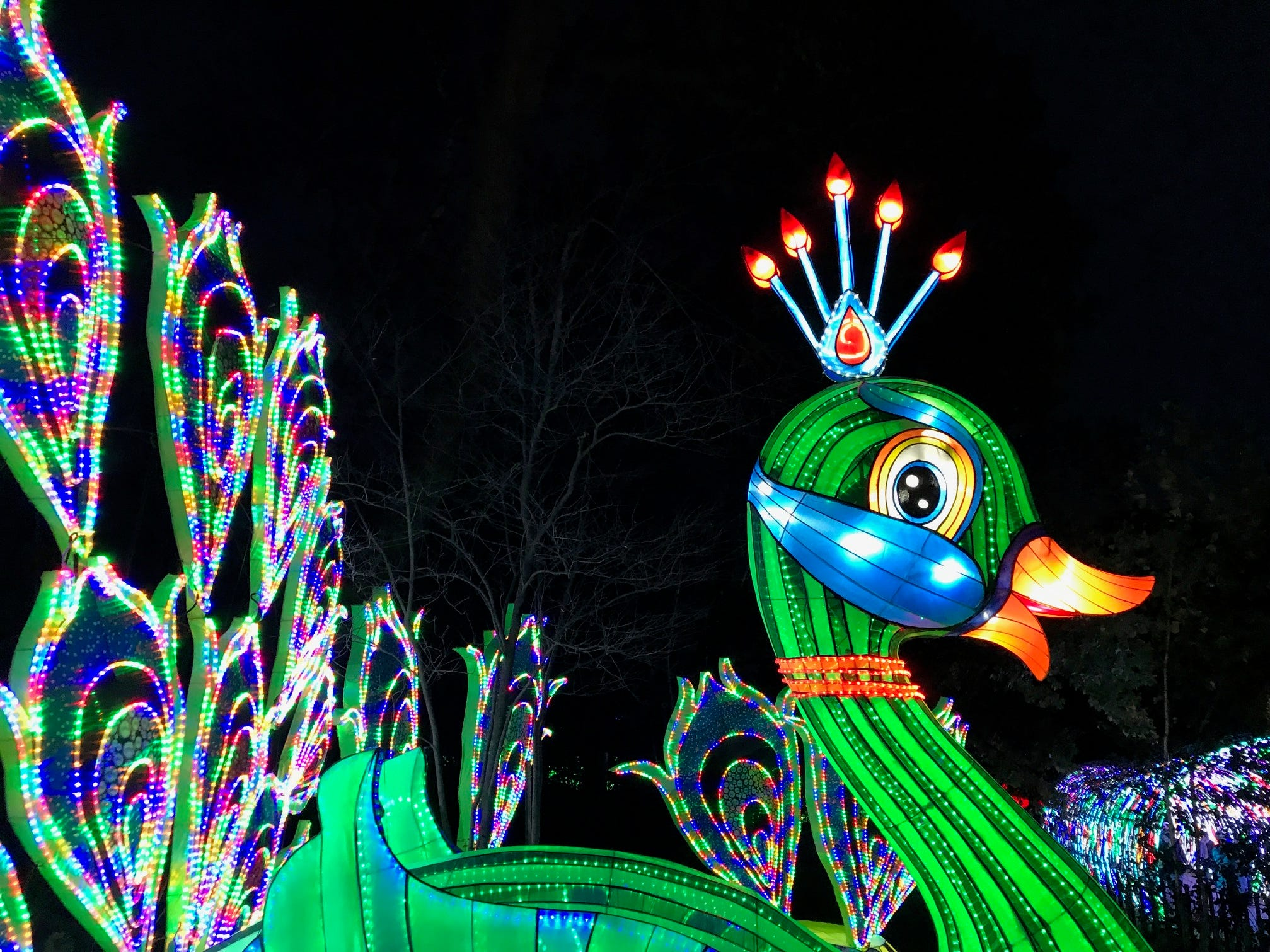 The peacock is filled with color at the China Lights lantern festival on the grounds of the Boerner Botanical Gardens.