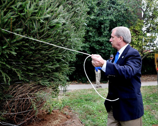 Rutherford County Mayor Bill Ketron starts to remove binding from the branches of the tree that the Rutherford County planted on the lawn of the Rutherford County historical courthouse on Thursday, Oct. 25, 2018, to become the County's permanent tree.