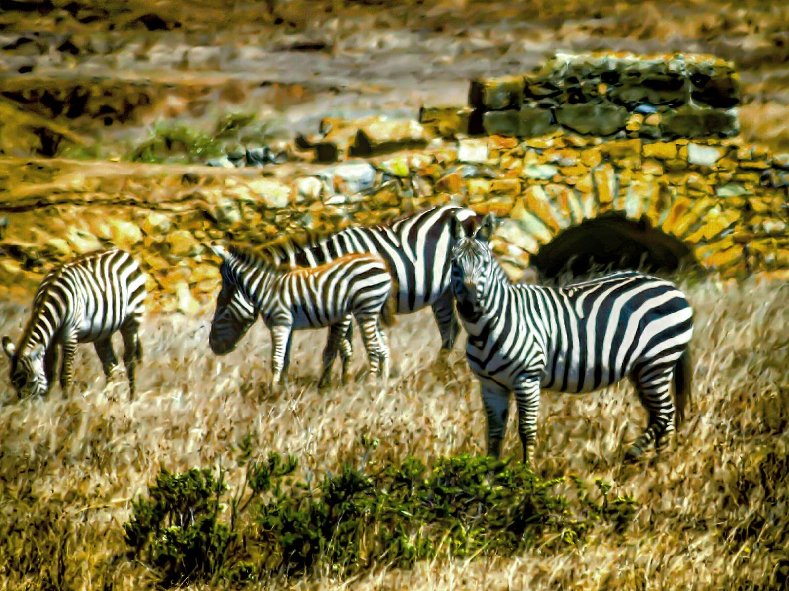 You can even see the site of what was once the largest private zoo in the whole country. If you're lucky, you might be able to spot some of the wild descendants of the zoo's zebras wandering the grounds.
