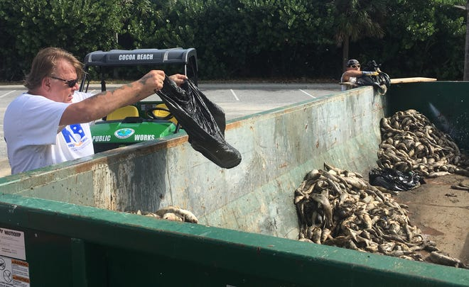 Mickey Martin and Chuck Graves, of Keep Brevard Beautiful, dump bags of dead fish in a dumpster Friday at Paradise Beach Park.