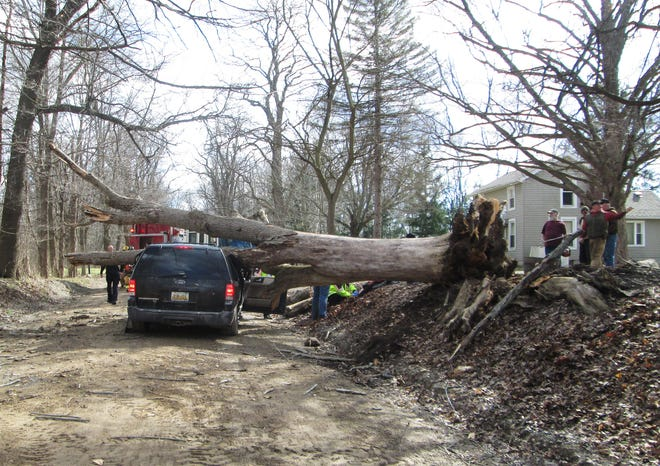 This fallen ash tree crushed a vehicle in a fatal accident on a rural road in Howell in 2016.