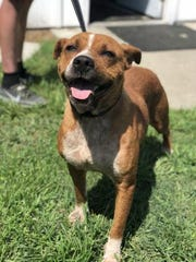 Mandy, pictured here, is set to return to South Carolina after being evacuated during Hurricane Florence. Another dog was injured and two were shot and killed at the location she was staying at before being taken home.