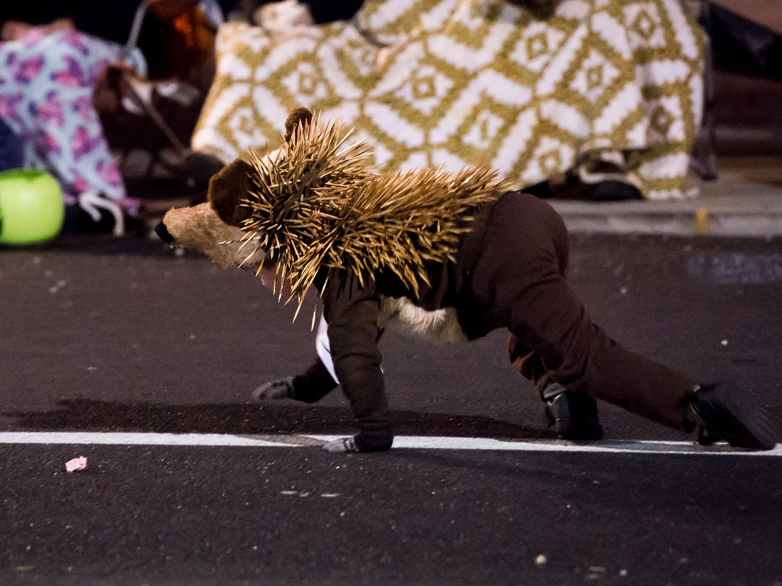 A porcupine walks down Baltimore Street during the 77th annual Hanover Halloween parade on Thursday, October 25, 2018.