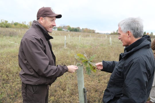 Jason Lewis, director of the Ottawa National Wildlife Refuge, and U.S. Rep. Bob Latta, R-Bowling Green, examine healthy young trees planted at a restoration project planned to be open public hunting grounds.