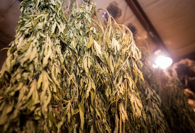 Marijuana plants are hung to dry at the St. Clair County Sheriff's drug task force.