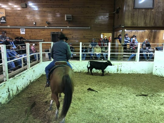 A small crowd of buyers watched closely as cattle were shown in a small pen at the St. Onge Livestock auction recently. The weight of animals is displayed on an illuminated board above the ring.