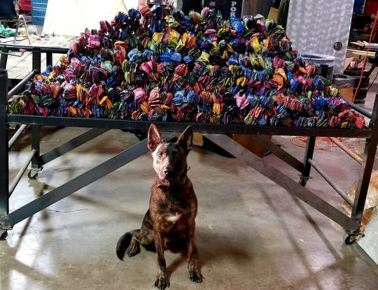 K9 Deputy Cane with the Wichita County Sheriff's Office reportedly found over 650 pounds of THC hash oil cartridges during an open air sniff on a vehicle Thursday, Oct. 26, 2018.
