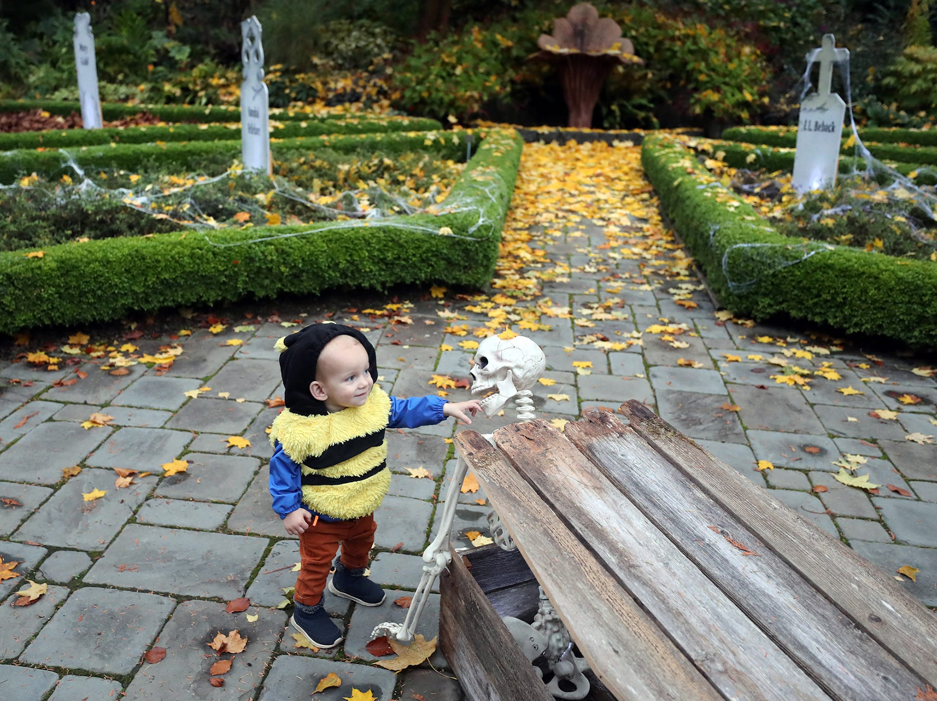 Lou Ramsey, 1, of Bremerton has a skeleton in a coffin bite his hand in the graveyard at the Haunted Heronswood 2018 in Kingston was Friday and Saturday, October,26-27. The second annual garden halloween charters tour featured some SÕKlallam folk stories.