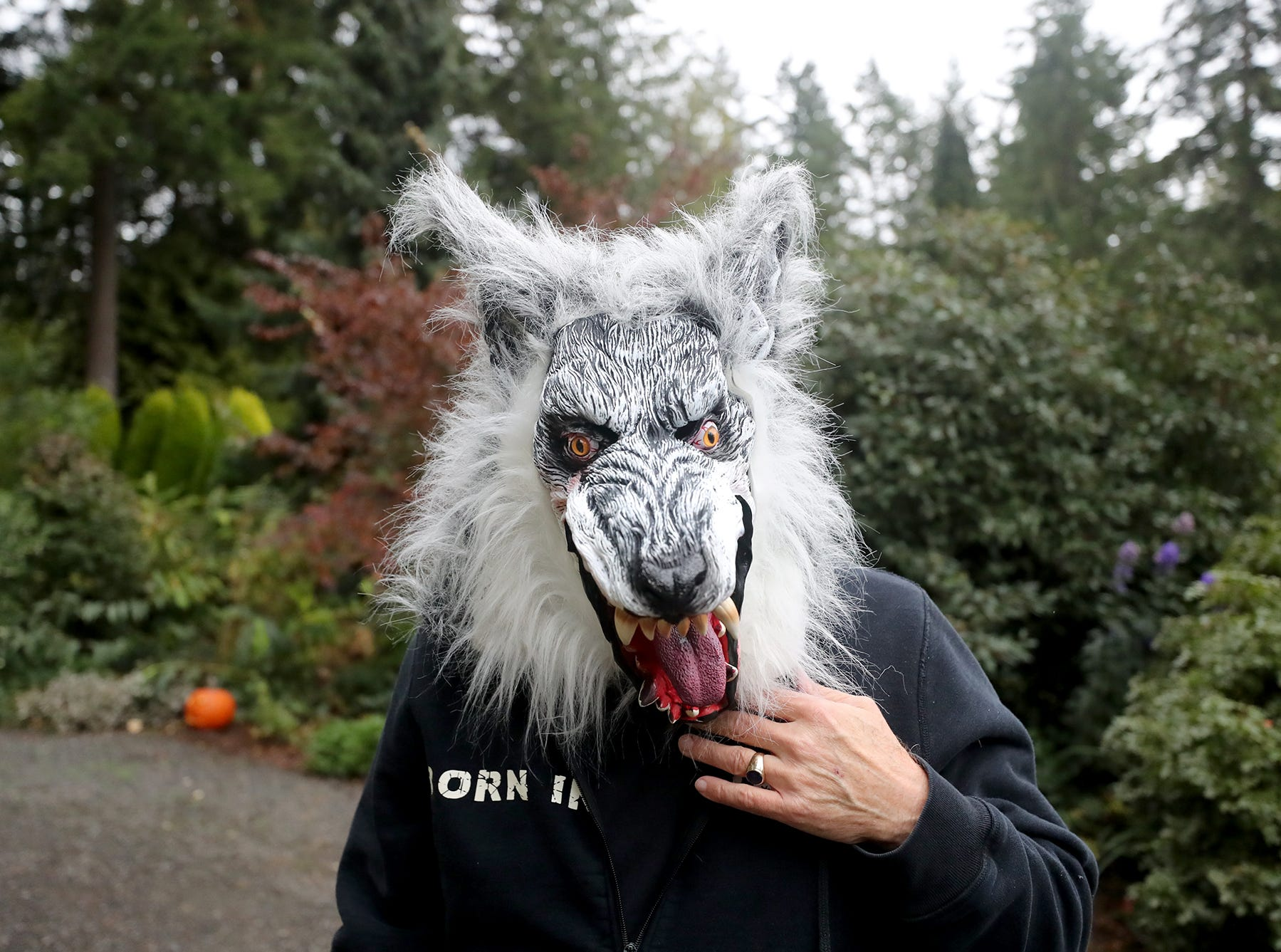 Robert Jones plays a wolf at the Haunted Heronswood 2018 in Kingston was Friday and Saturday, October,26-27. The second annual garden halloween charters tour featured some SÕKlallam folk stories.