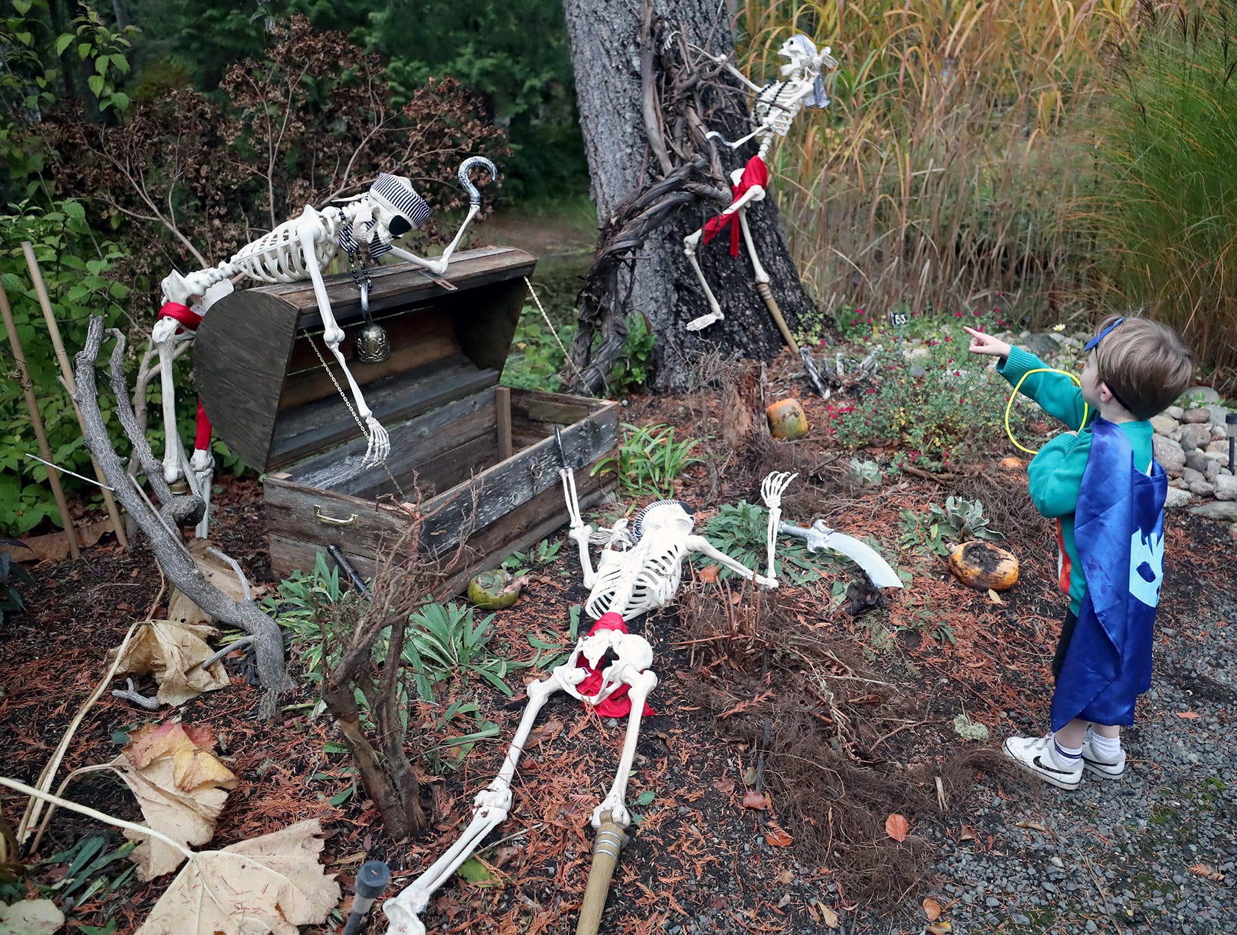 Theo Sanders, 4, of Snoqualmie looks at the  pirate skeletons at the Haunted Heronswood 2018 in Kingston was Friday and Saturday, October,26-27. The second annual garden halloween charters tour featured some SÕKlallam folk stories.