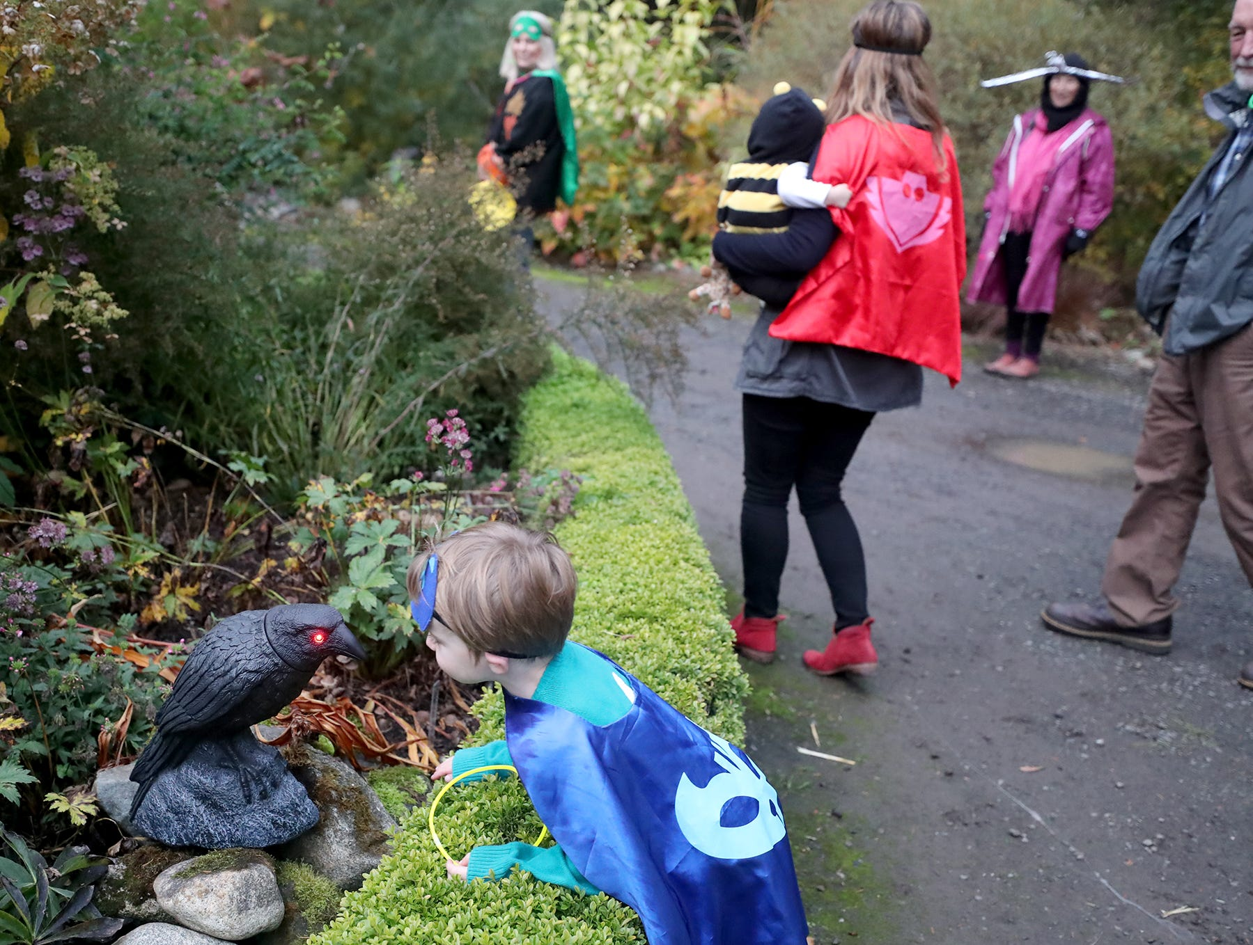 Theo Sanders, 4, of Snoqualmie gets a close up view of a raven at the Haunted Heronswood 2018 in Kingston was Friday and Saturday, October,26-27. The second annual garden halloween charters tour featured some SÕKlallam folk stories.