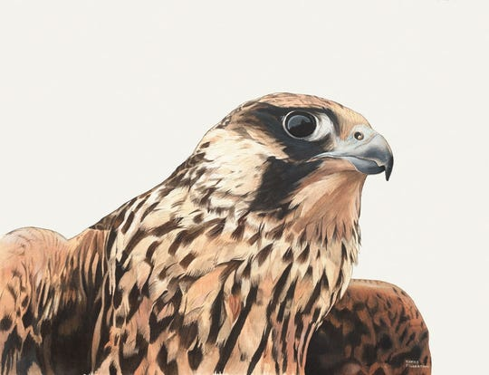 """Birds of Prey,"" an exhibit of original art by James Fiorentino and Michael McNelly is on view now through Nov. 18, at the Environmental Education Center, 190 Lord Stirling Road in the Basking Ridge section of Bernards. Pictured is James Fiorentino's ""Falcon."""