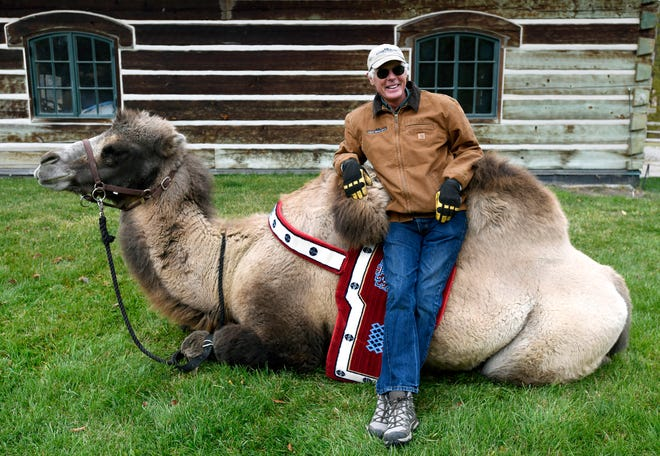 In this Wednesday, Oct. 10, 2018 photo, Jim Watson sits on Carlos, his seven-year-old Bactrian camel, at the Spring Brook Ranch near Kalispell, Mont. Watson got the camel after delivering one of the yaks he and his wife raise to a Colorado ranch, where he bonded with Carlos. He told Carlos' owners that he'd always have space for the camel, which has a life expectancy of 40 to 50 years. (Tom Bauer/The Missoulian via AP)