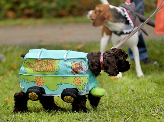 "Eleanor, owned by Melissa Freeman and Garret Enright of Indianapolis, struts her Scooby Doo Mystery Machine costume during the Barktoberfest event held at the Asa Bales Park in Westfield on October 27, 2018. The day featured pet-related vendors at the ""Mutt Mart,"" activities for humans and dogs at a Canine Cabana, a canine agility course, a caricature tent and a chance to win prizes at Humane Society Hut  while also hosting a pet costume contest."