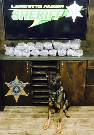 The marijuana seized by the Lafayette's Sheriff's newly-formed Narcotics Unit