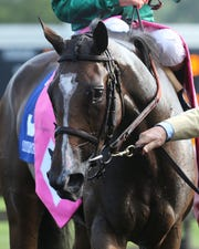 Sistercharlie, trained by Chad Brown, is set to run in the 2018 Breeders' Cup Filly & Mare Turf.