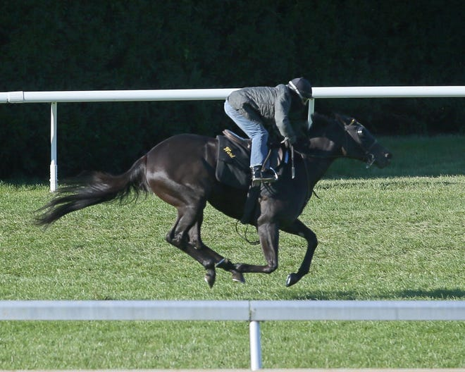 Shang Shang Shang trains at Keeneland ahead of the 2018 Breeders' Cup Juvenile Turf Sprint